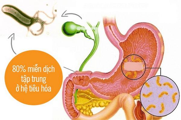 Rối loạn tiêu hóa do vi khuẩn Coliform