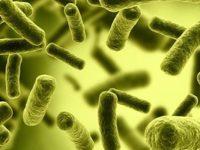 Coliform là vi khuẩn gây ô nhiễm nguồn nước sinh hoạt