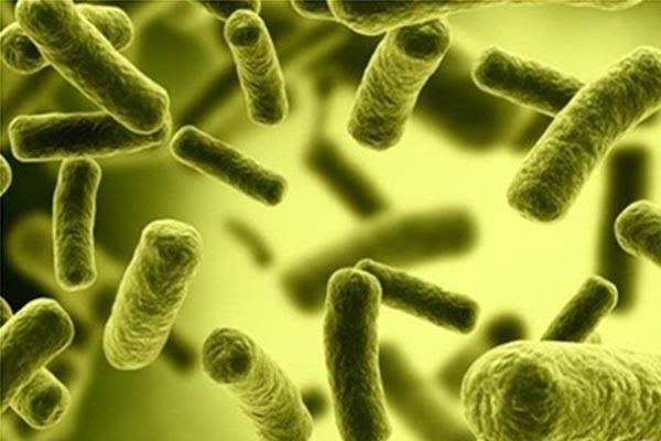 Vi khuẩn Coliform